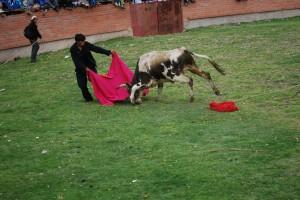 Bull fight Copacabana