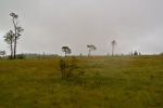 Untouched moorland.