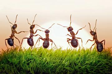 ant-types-1