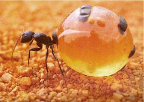 honeypot29w