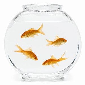 fish-bowl-600